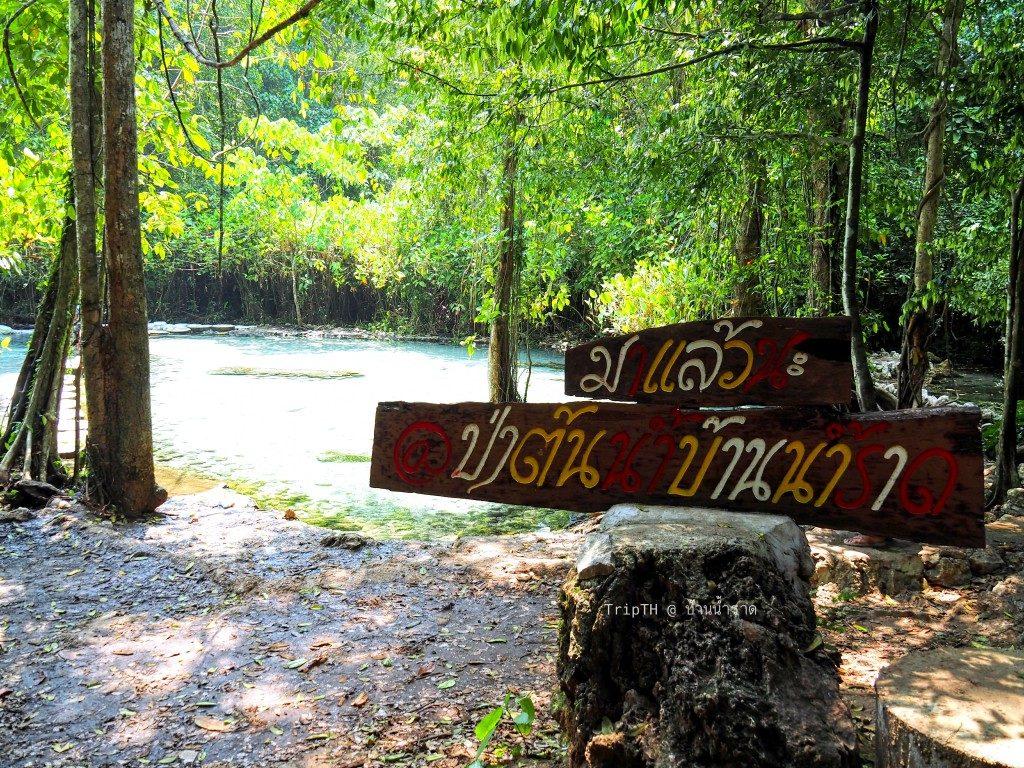 ป่าต้นน้ำ บ้านน้ำราด (2)