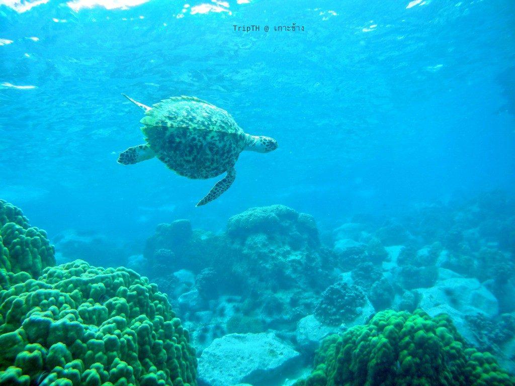 ดำน้ำเกาะยักษ์เล็ก (2)