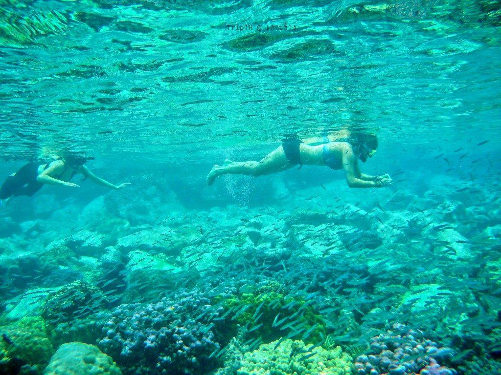 ดำน้ำเกาะยักษ์เล็ก (5)