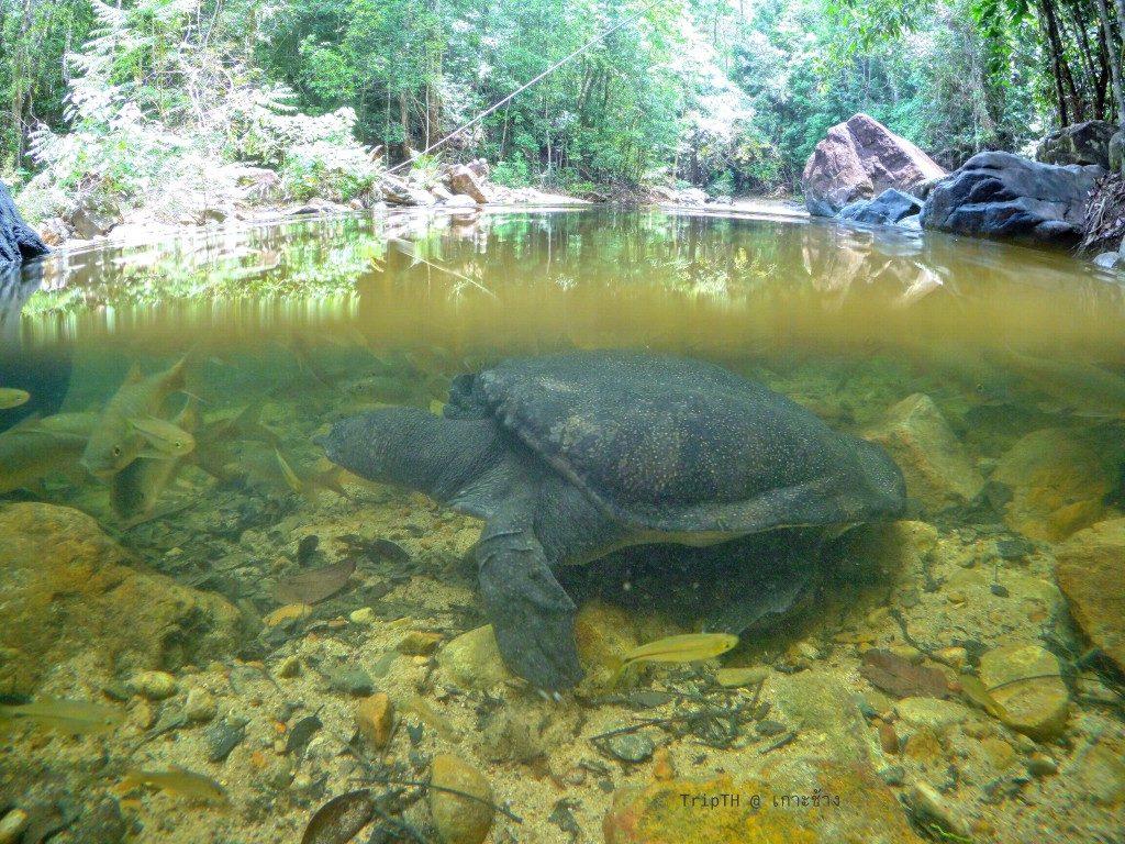 น้ำตกคลองพลู อุทยานแห่งชาติหมู่เกาะช้าง (3)