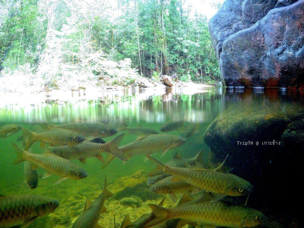 น้ำตกคลองพลู อุทยานแห่งชาติหมู่เกาะช้าง (4)