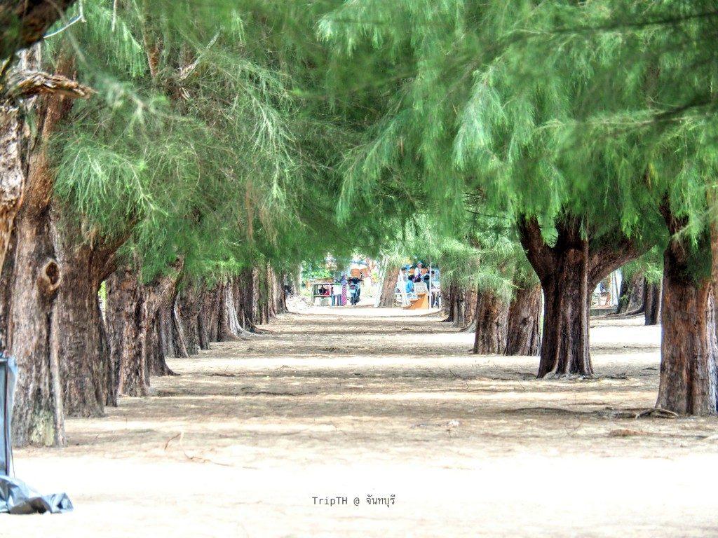 หาดแหลมสิงห์ (2)