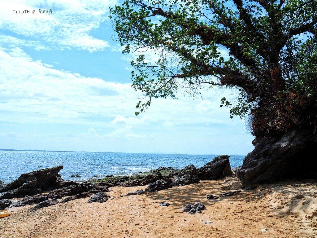 เกาะกวาง (4)