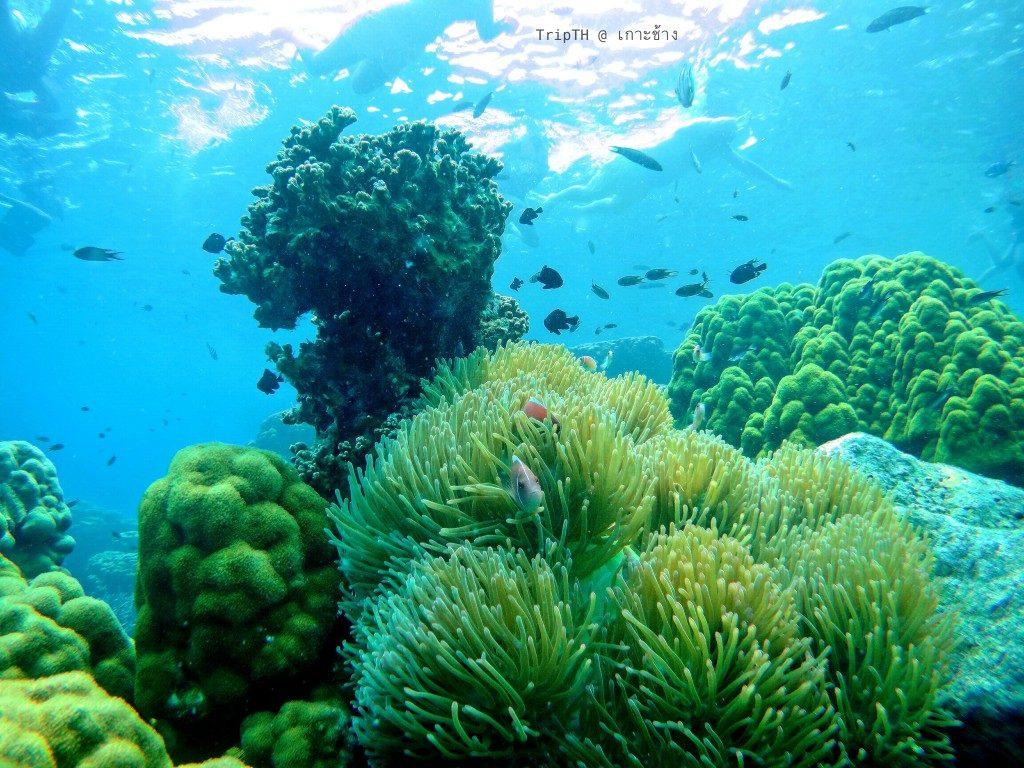 เกาะยักษ์เล็ก (1)