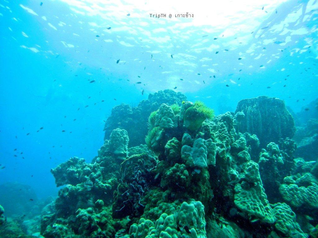 เกาะยักษ์เล็ก (3)