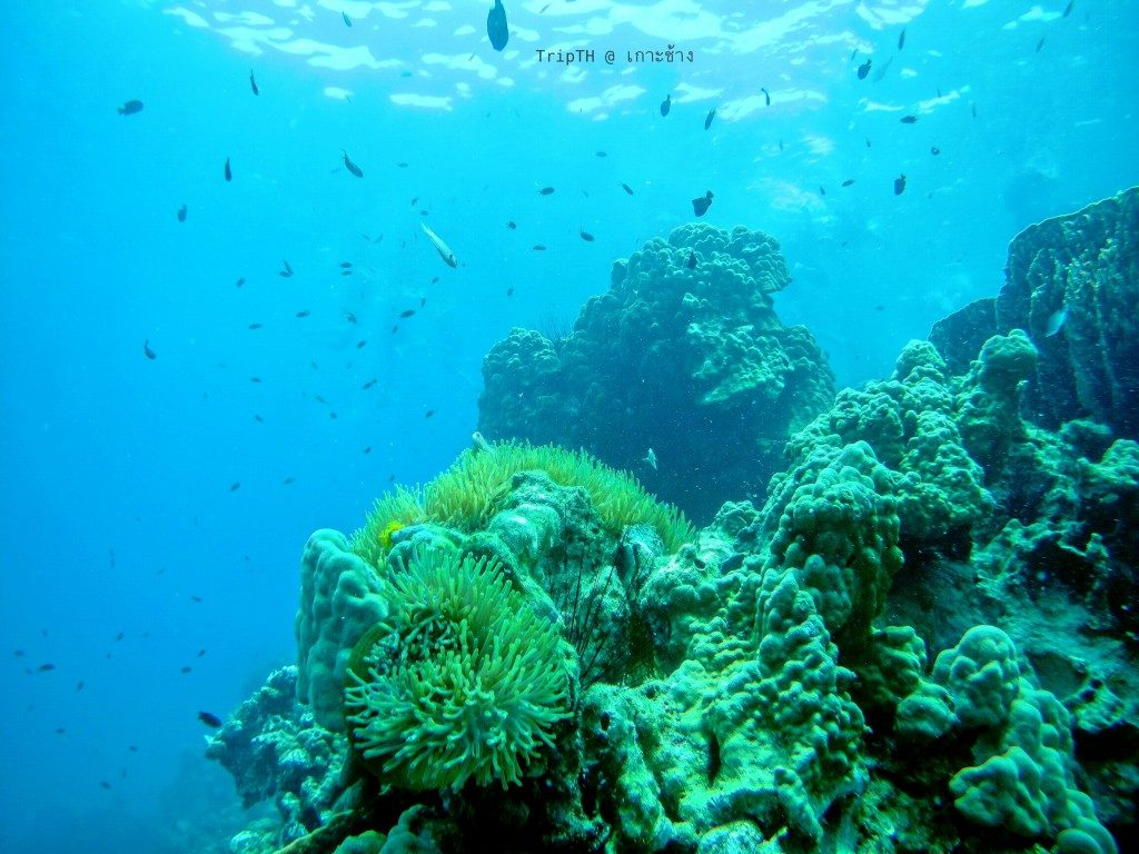 เกาะยักษ์เล็ก (4)