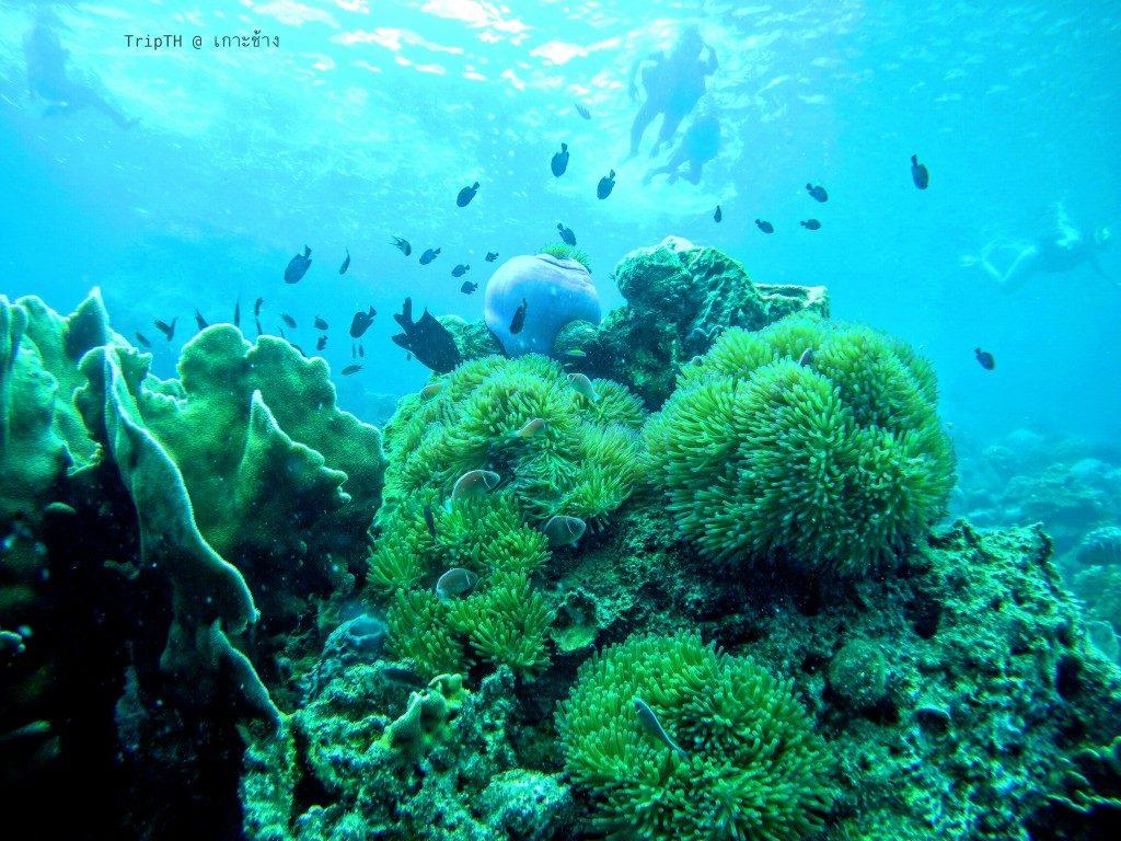 เกาะยักษ์ใหญ่ (2)