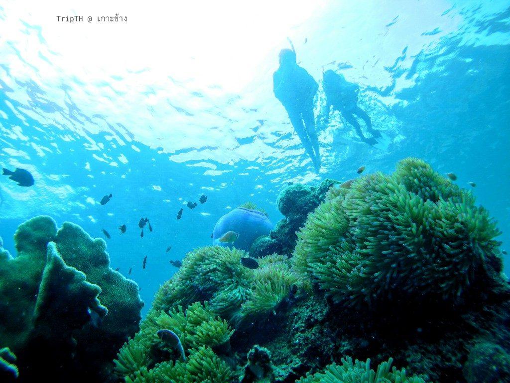 เกาะยักษ์ใหญ่ (3)