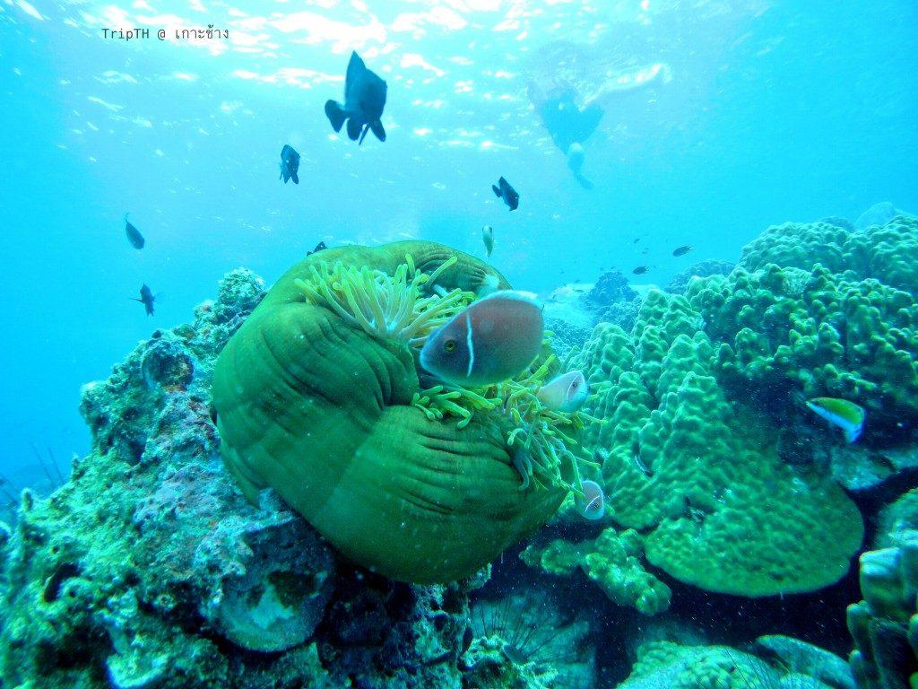 เกาะยักษ์ใหญ่ (4)