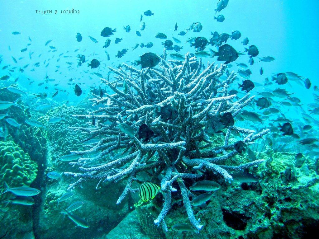 เกาะยักษ์ใหญ่ (5)