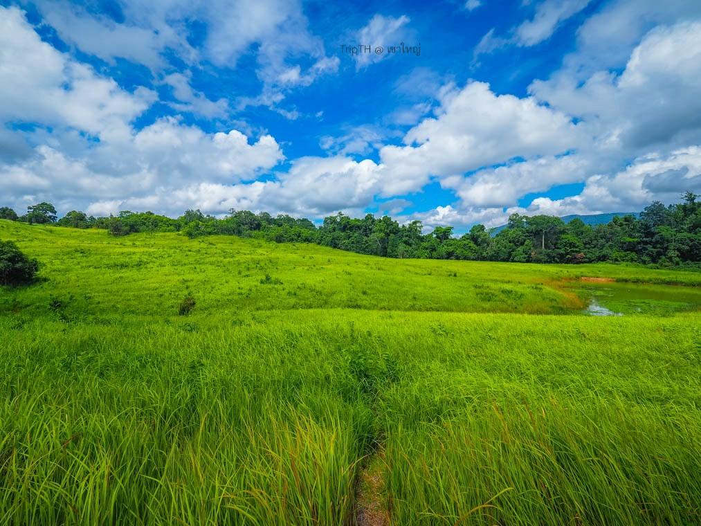 ทุ่งหญ้าเขาใหญ่ (2)
