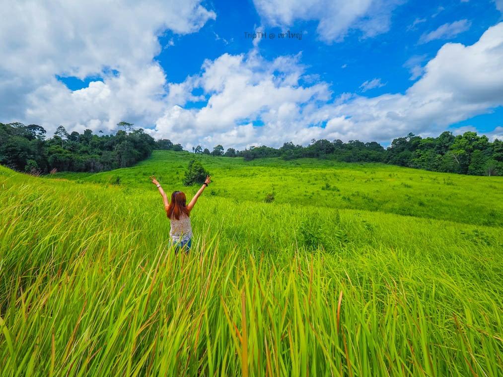 ทุ่งหญ้าเขาใหญ่ (3)