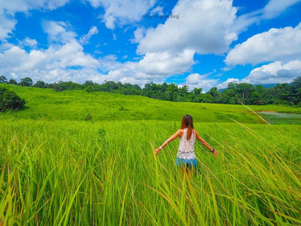 ทุ่งหญ้าเขาใหญ่ (4)
