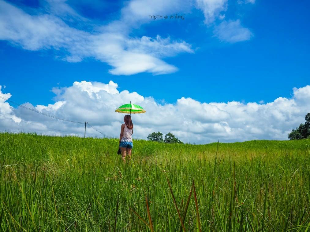 ทุ่งหญ้า อ่างเก็บน้ำสายศร (1)