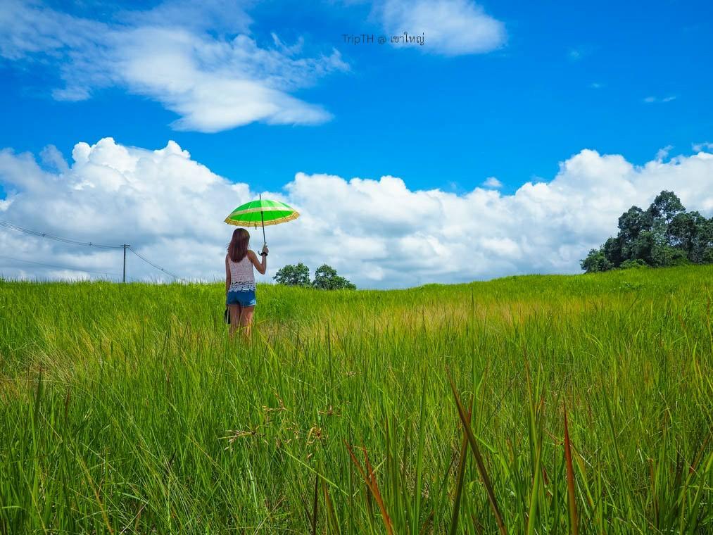 ทุ่งหญ้า อ่างเก็บน้ำสายศร (2)
