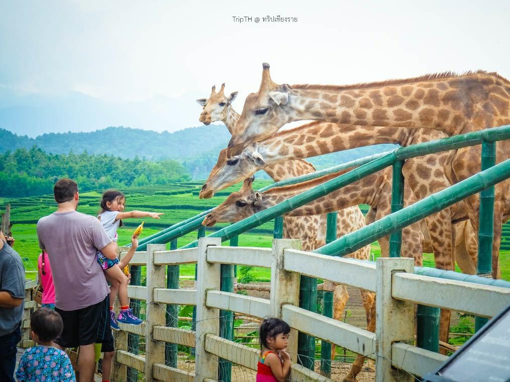 สวนสัตว์ สิงห์ปาร์ค (1)