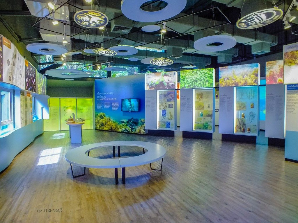 พิพิธภัณฑ์ธรรมชาติวิทยาและเกาะทะเลไทย (2)