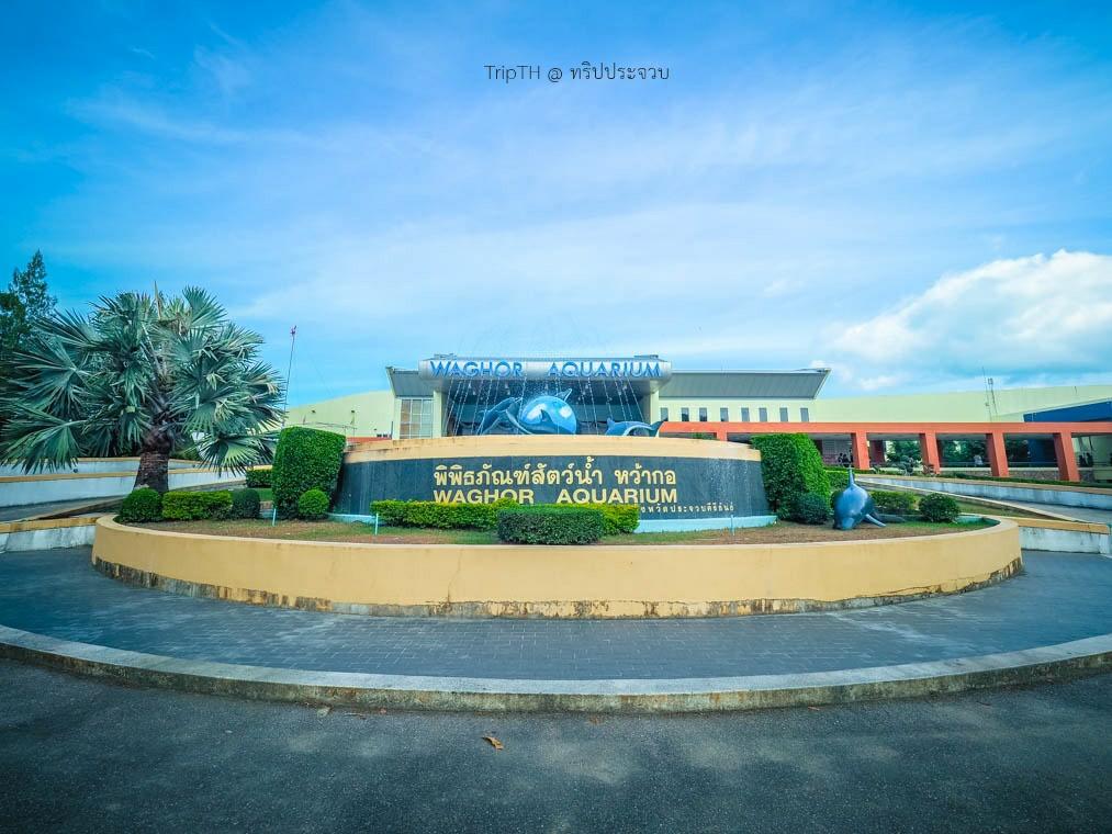 พิพิธภัณฑ์สัตว์น้ำ หว้ากอ (1)