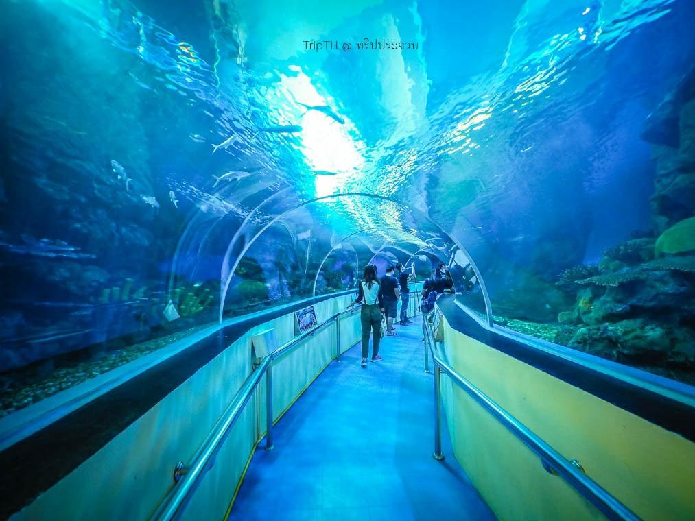 พิพิธภัณฑ์สัตว์น้ำ หว้ากอ (2)