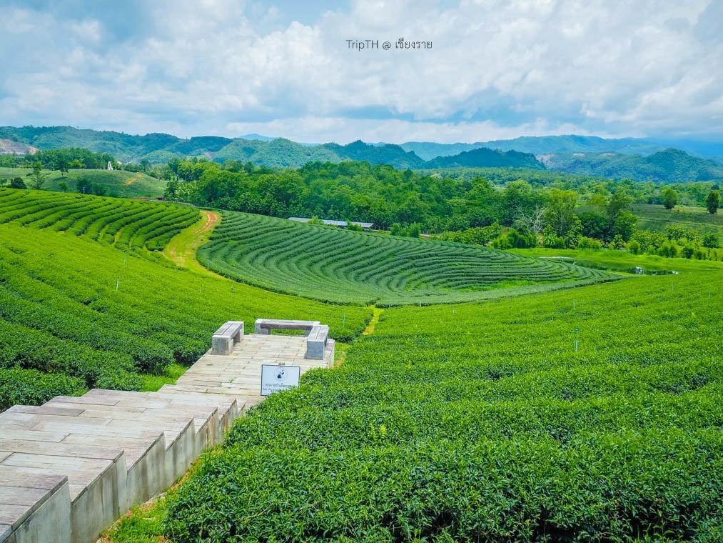 ไร่ชาฉุยฟง (2)