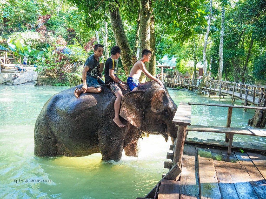 ช้างน้ำตกตาดแส้ (3)