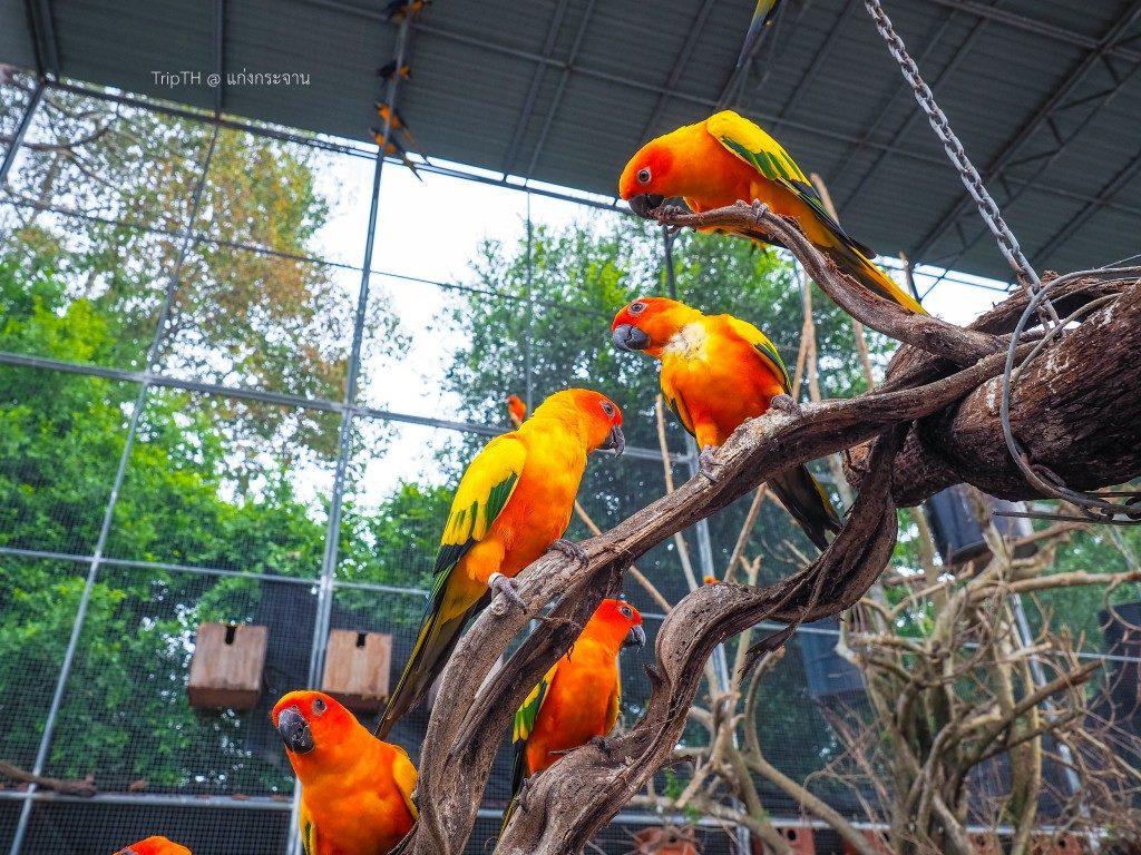 นกแก้วแสนรู้ (1)