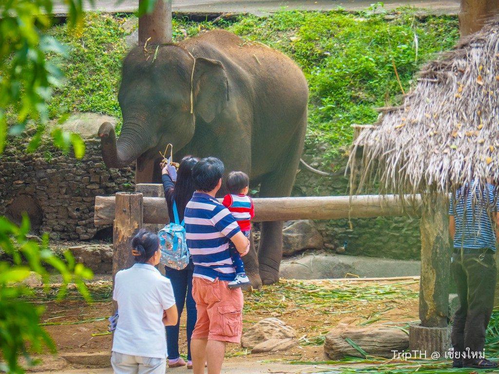 ปางช้าง แม่สา