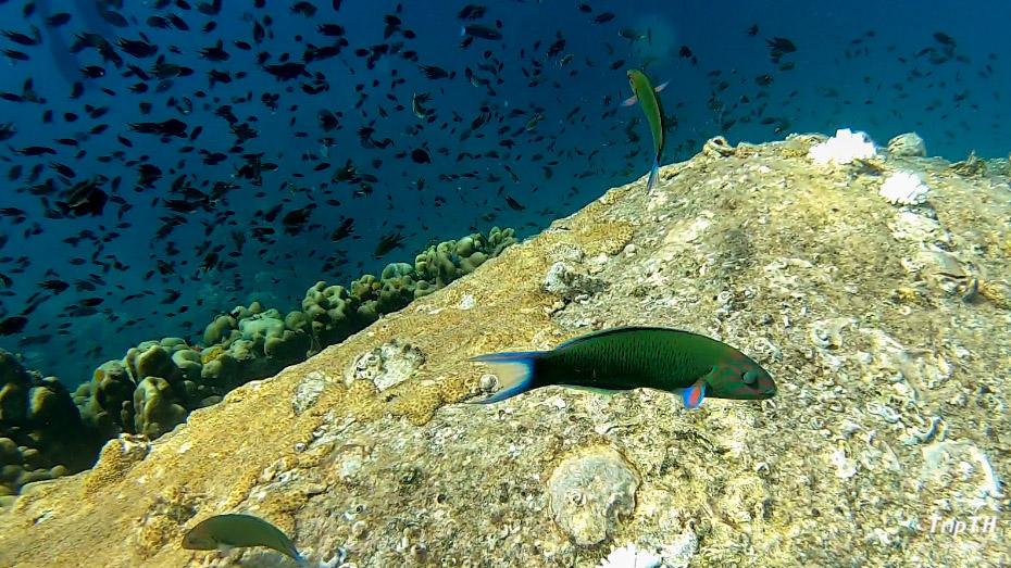 Sea Mastermind Premium Dive Resort